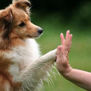 dog-truques