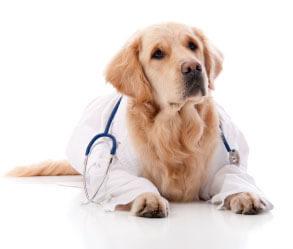 Dr.-Golden