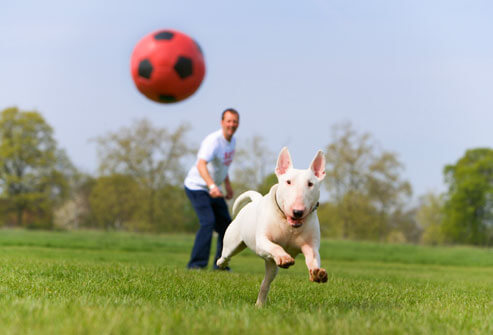 dog-chasing-ball1