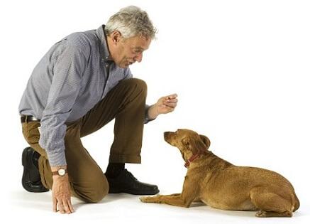 Como-treinar-seu-cachorro-a-ficar-quieto