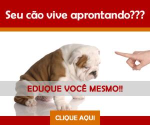 Como adestrar seu cão você mesmo! Veja aqui.