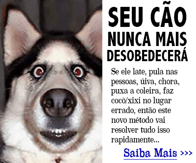 Clique aqui para entender como adestrar seu cão.